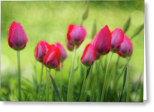 Lovely Tulips Greeting Card by Gabriela Neumeier