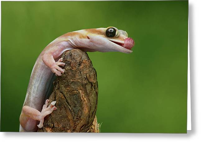 Greeting Card featuring the photograph Lovely Water - Velvet Gecko by Nikolyn McDonald