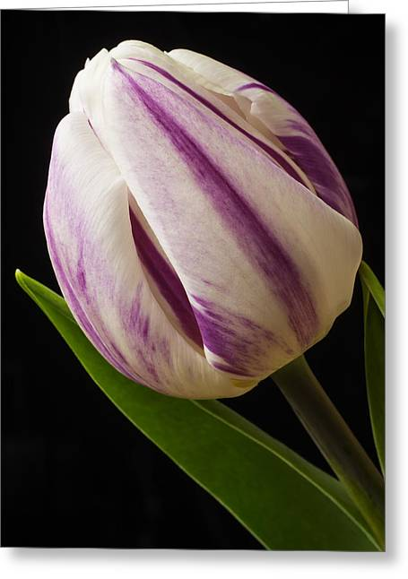 Lovely White And Purple Tulip Greeting Card by Garry Gay