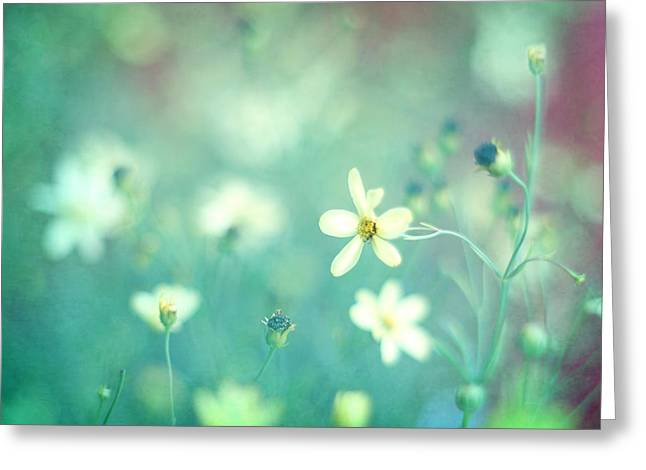 Wildflower Photos Greeting Cards - Lovestruck Greeting Card by Amy Tyler