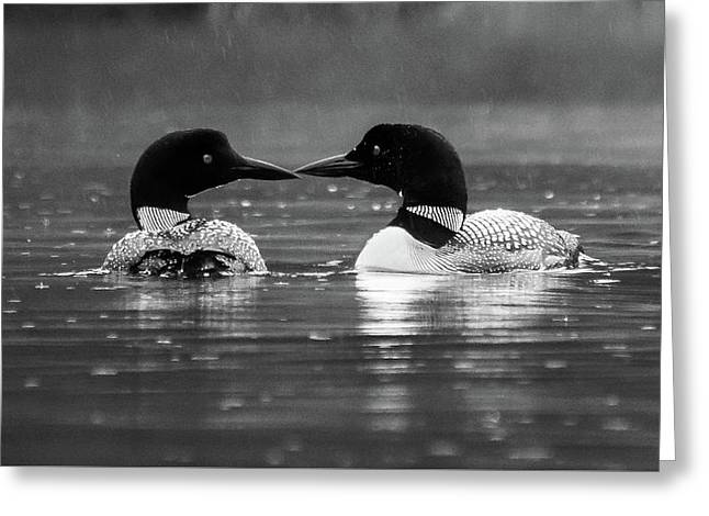 Greeting Card featuring the photograph Loving Loons by Darryl Hendricks
