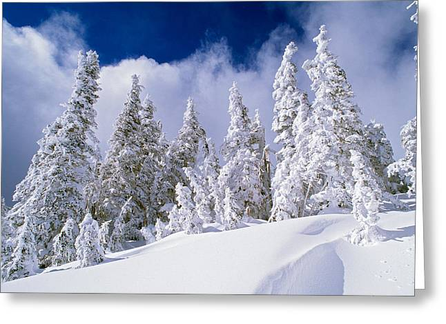 Low-angle View Of Snow-covered Pine Greeting Card