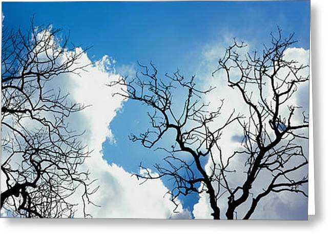 Low Angle View Of Trees Against Cloudy Greeting Card by Panoramic Images