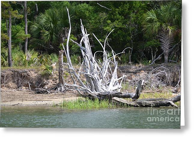 Greeting Card featuring the photograph Low Country Driftwood by Carol  Bradley