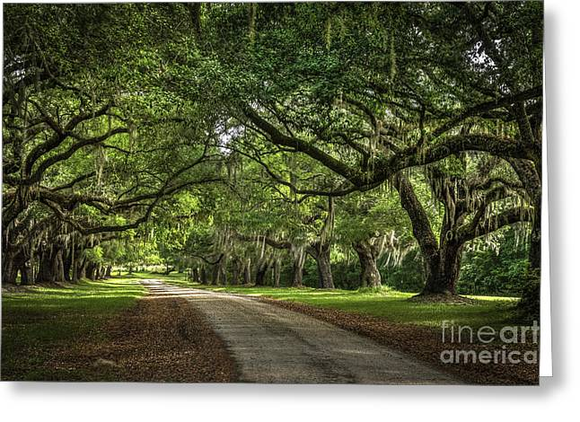 Low Country Live Oak Greeting Card