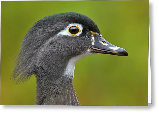 Greeting Card featuring the photograph Low Key by Tony Beck
