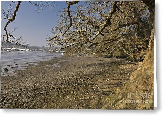 Low Spring Tide At Mylor Creek Greeting Card by Terri Waters