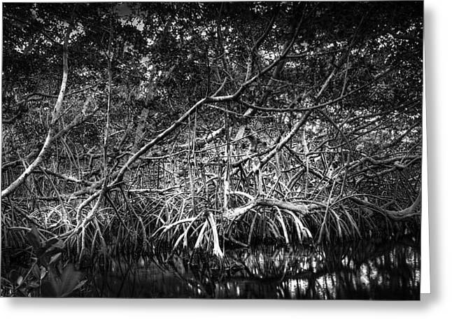 Low Tide Bw Greeting Card