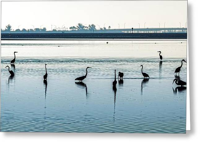 Greeting Card featuring the photograph Low Tide Gathering by Steven Sparks