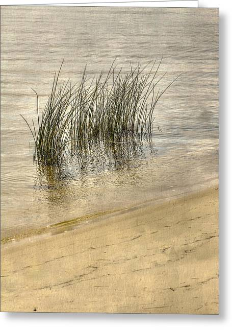 Low Tide Grass Greeting Card by Randy Steele