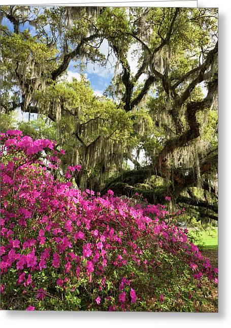 Lowcountry South Carolina Spring Azalea And Live Oak Greeting Card by Mark VanDyke