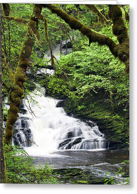 Lower Lunch Creek Falls Greeting Card