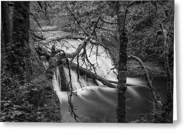 Lower North Falls In Black And White  Greeting Card