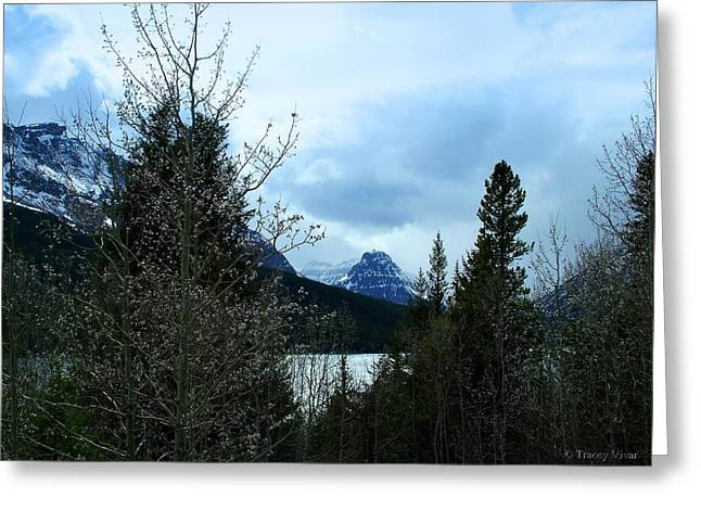 Lower Two Med Lake Through The Trees Greeting Card