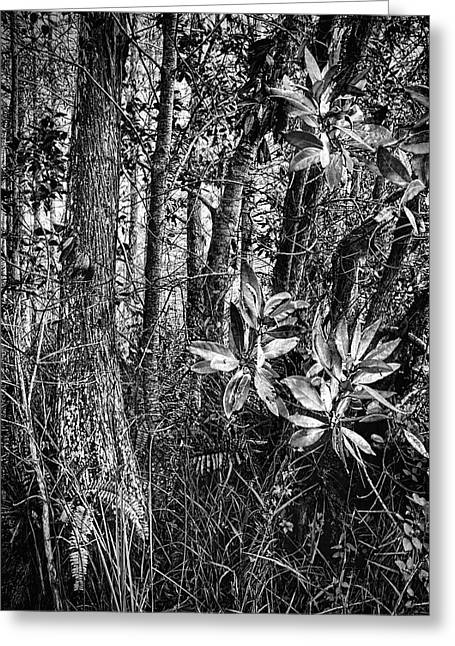 Loxahatchee Refuge 6621bw Greeting Card by Rudy Umans