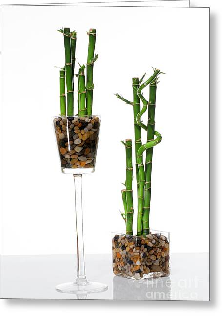 Lucky Bamboo Greeting Card by Eran Turgeman