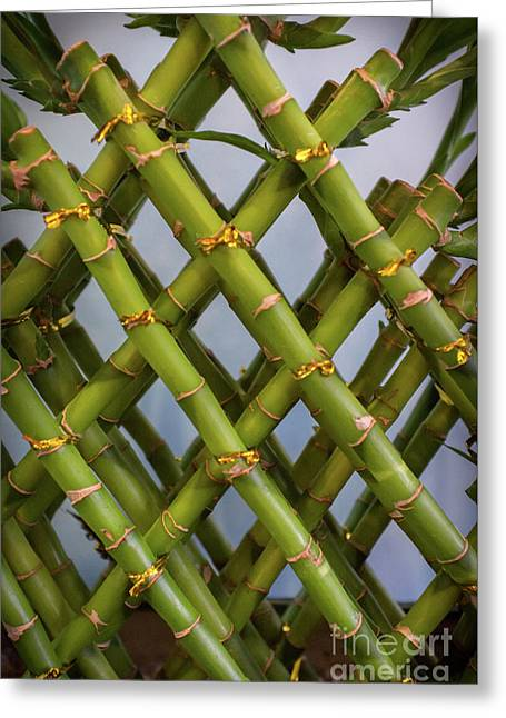 Lucky Bamboo Plant Greeting Card