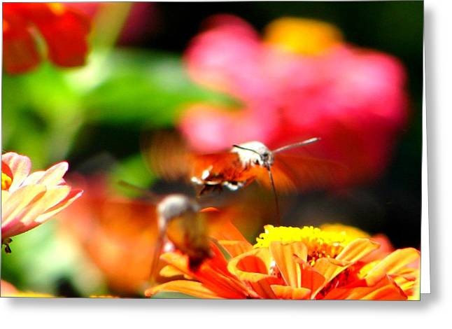 Greeting Card featuring the photograph Lucky Shot by Ana Maria Edulescu