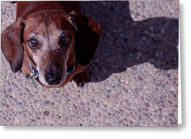 Greeting Card featuring the photograph Lucy by Lora Lee Chapman