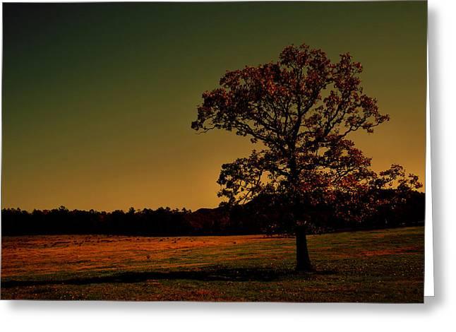 Lullabye Tree Greeting Card by Nina Fosdick