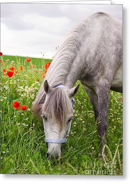 Lulu And The Poppies  Greeting Card