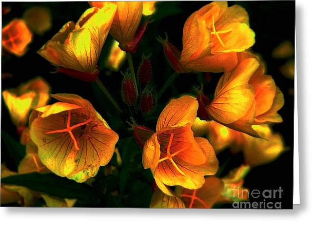 Greeting Card featuring the photograph Luminous by Elfriede Fulda