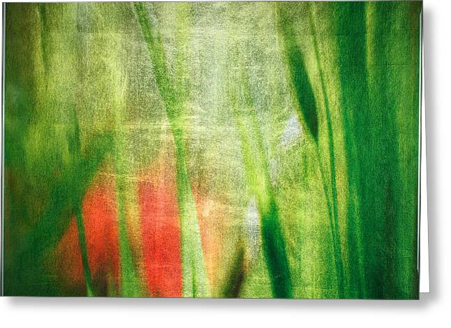 Luminous Grasses #6071 Greeting Card by Mark Stephenson