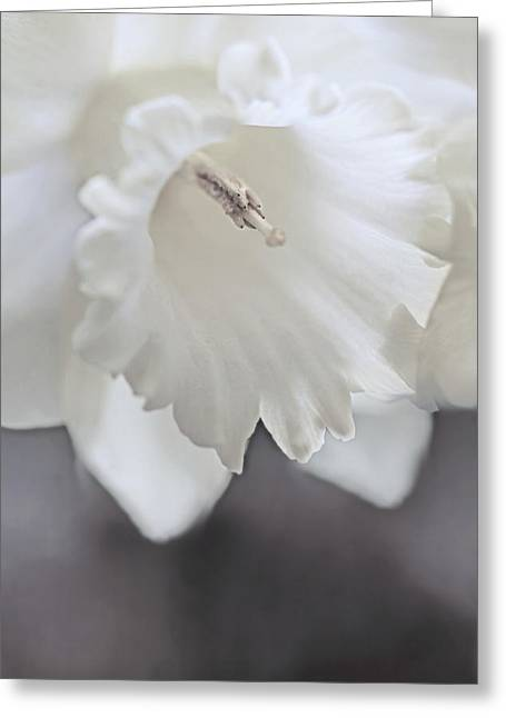 Luminous Ivory Daffodil Flower Greeting Card by Jennie Marie Schell