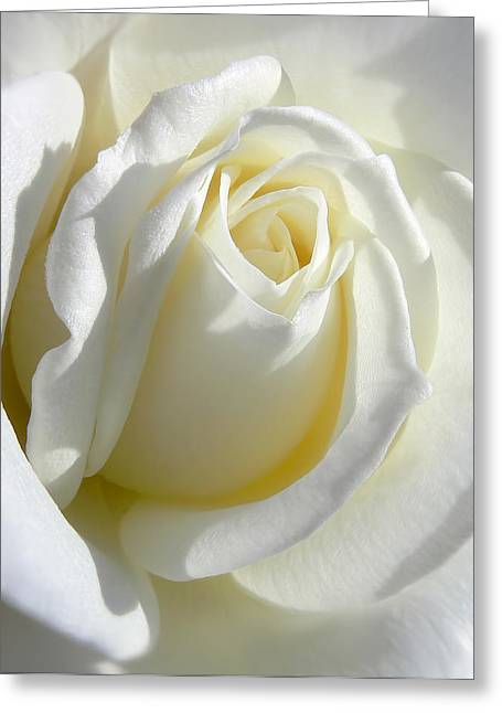 Rose Art Greeting Cards - Luminous Ivory Rose Greeting Card by Jennie Marie Schell