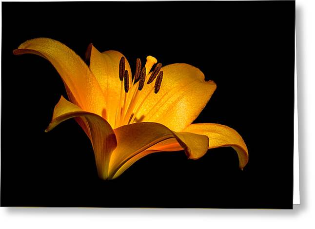 Luminous Lilly Greeting Card