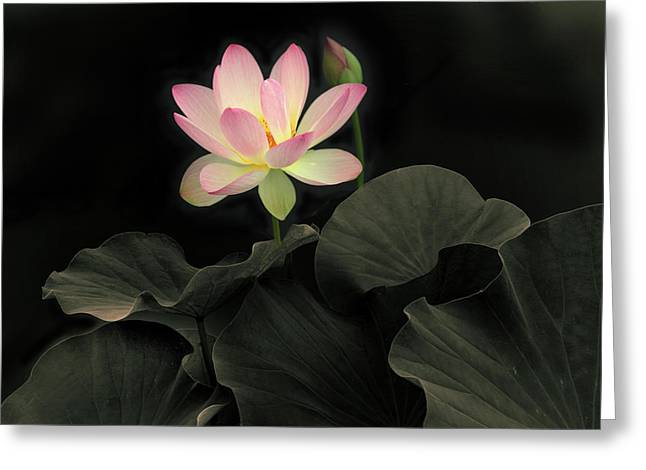 Luminous Lotus Greeting Card by Jessica Jenney