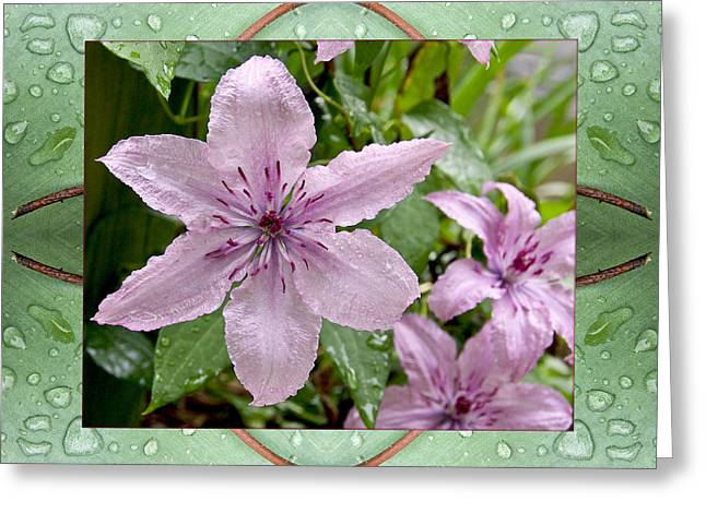 Greeting Card featuring the photograph Luminous Mauve by Bell And Todd