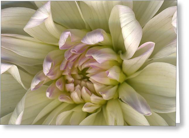Luminous Petals Greeting Card