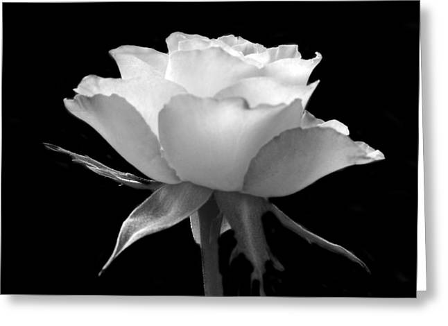 Luminous Rose Greeting Card