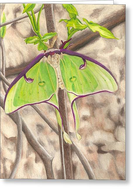 Luna Drawings Greeting Cards - Luna Moth Greeting Card by Courtney Trimble