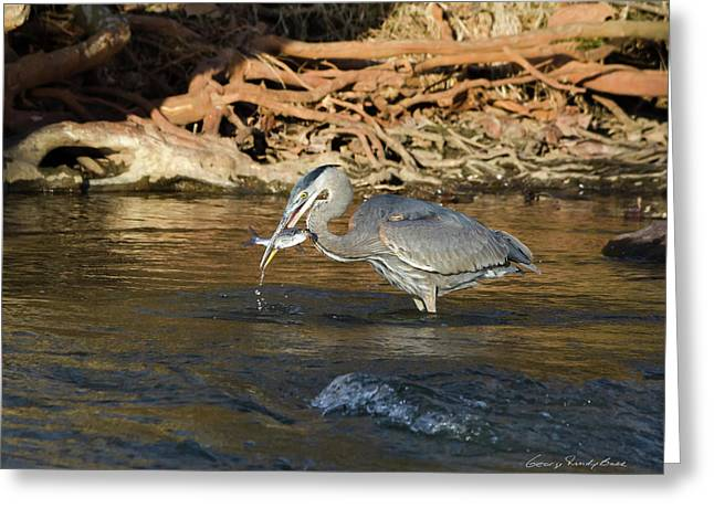 Lunch On The Neuse River Greeting Card