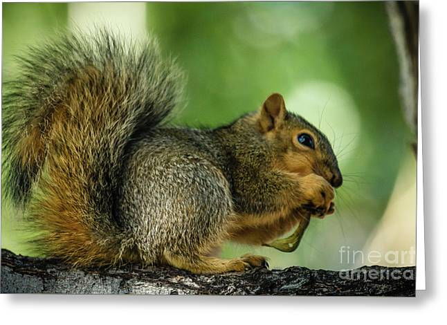 Lunch Greeting Card by Robert Bales