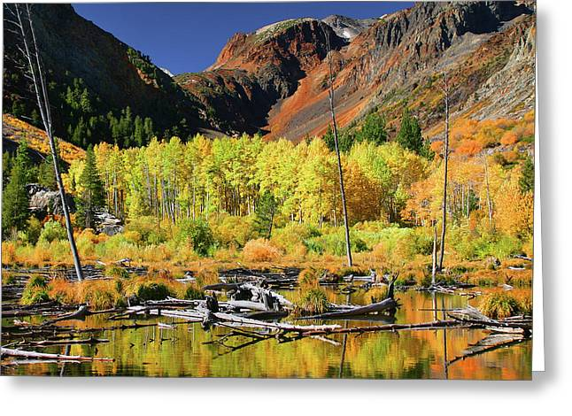 Lundy Canyon Beaver Pond Greeting Card by Tom Kidd