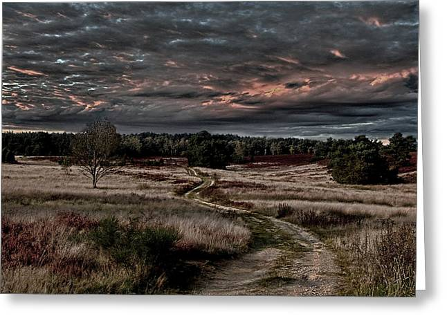 Luneburg Heath Greeting Card by Joachim G Pinkawa