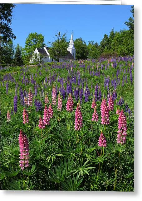 Lupin Church Greeting Card by Larry Landolfi