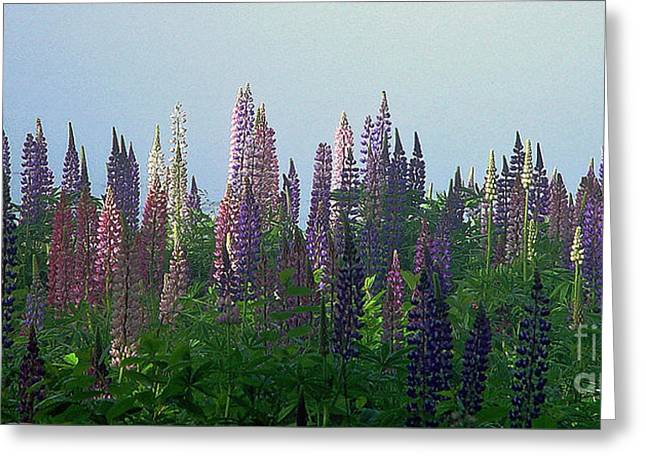 Lupine In Morning Light Greeting Card