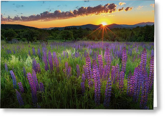 Lupine Lumination Greeting Card by Bill Wakeley