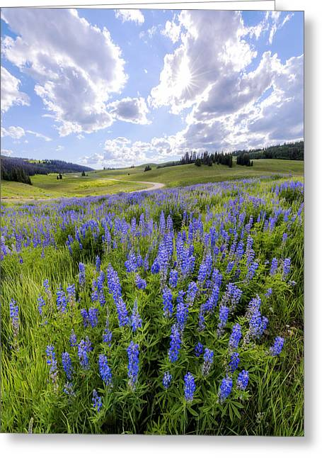 Lupines Greeting Cards - Lupine Pass Greeting Card by Chad Dutson