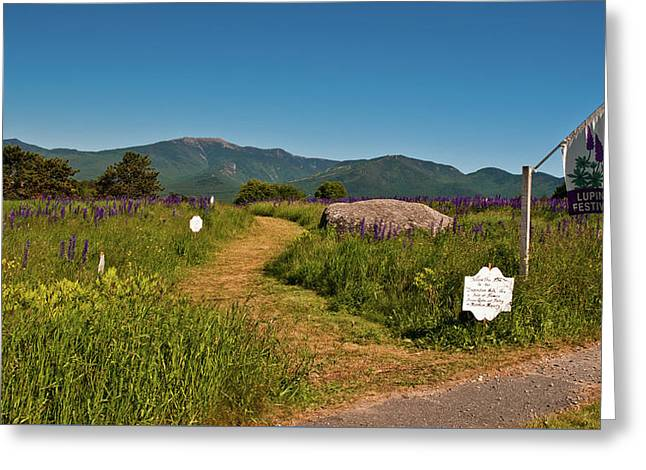 Greeting Card featuring the photograph Lupine Path To The Notch by Brenda Jacobs