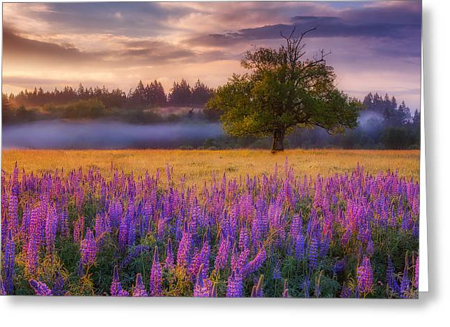 Lupine Sunrise Greeting Card by Darren White