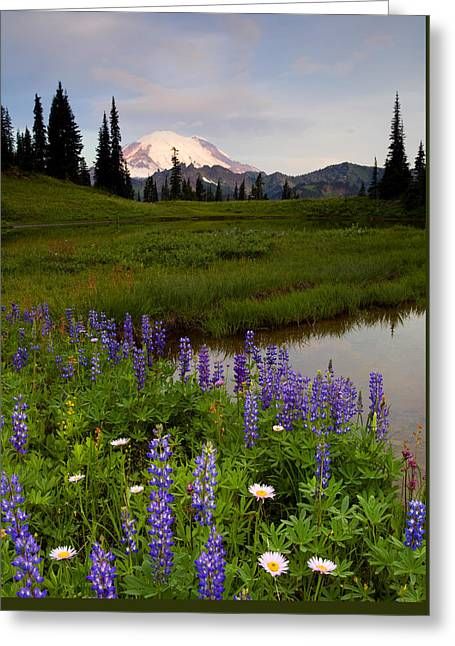Lupine Sunrise Greeting Card by Mike  Dawson