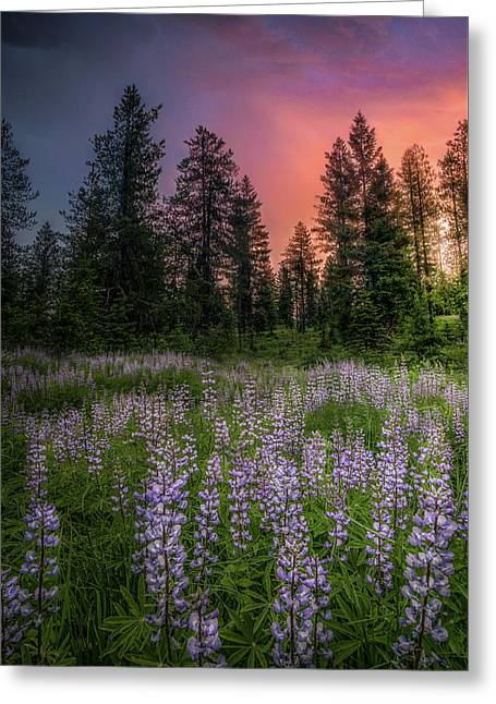 Lupine Sunset / Swan Valley, Montana Greeting Card