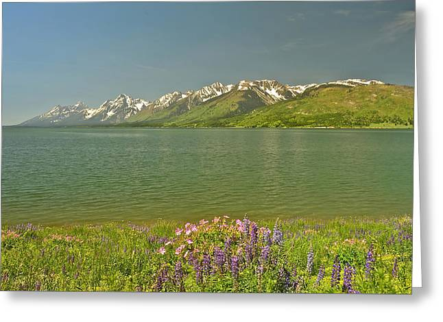 Lupines In The Tetons Greeting Card