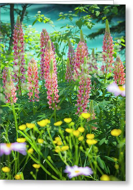 Greeting Card featuring the photograph Lupines by Mark Mille