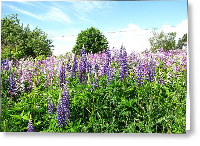 Lupins And Flocks Greeting Card by Melissa Parks